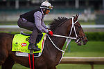 LOUISVILLE, KY - MAY 04: Majesto gallop in preparation for the Kentucky Derby at Churchill Downs on May 04, 2016 in Louisville, Kentucky. (Photo by Zoe Metz/Eclipse Sportswire/Getty Images)