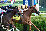 Wise Dan (no. 4), ridden by John Velazquez and trained by Charles LoPresti, wins the 56th running of the grade 2 Bernard Baruch Handicap for three year olds and upward on August 30, 2014 at Saratoga Race Course in Saratoga Springs, New York.  (Bob Mayberger/Eclipse Sportswire)
