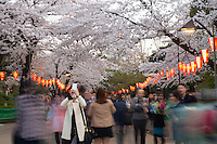 Young lady taking photos of Cherry Blossomat Ueno Park in Tokyo, Japan