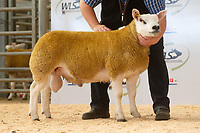 2019 Texel Sheep Welsh National Show & Sale