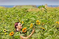 2020 07 26 Sunflowers in Rhossili, Wales, UK