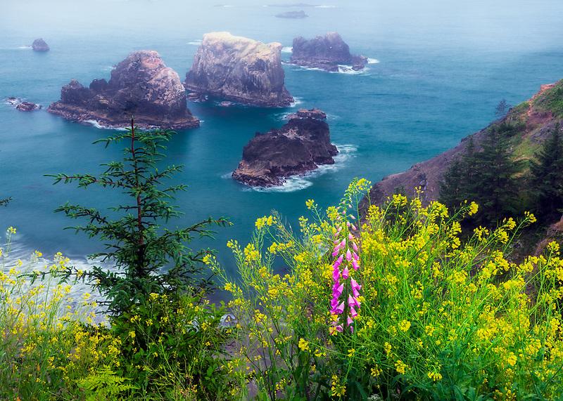 Mustard and foxglove at Arch Rock. viewpoint. Samuel H. Boardman State Scenic Corridor. Oregon