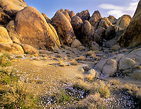 White flowers and Alabama Hills, California