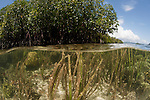 Split level of a seagrass and mangroves. North Raja Ampat, West Papua, Indonesia