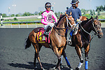 Lexie Lou(14) with Jockey Patrick Husbands aboard ran to victory at the 155th Queen's Plate at Woodbine Race Course in Toronto, Canada on July 06, 2014.