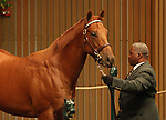 12 September 2010.  Hip #79 Distorted Humor - Oneofacat colt sold for $700,000 at the Keeneland September Yearling Sale.   Consigned by Lane's End.