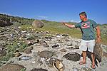 J. Nichols In Turtle Graveyard