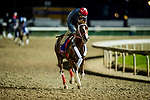 October 31, 2018 : Bucchero, trained by Tim Glyshaw, exercises in preparation for the Breeders' Cup Turf Sprint at Churchill Downs on October 31, 2018 in Louisville, Kentucky. Evers/ESW/Breeders Cup