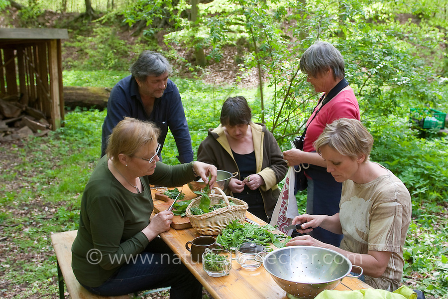 Kräuter im Frühjahr für Kräutersuppe und Wildgemüse - Salat ernten, sammeln und zubereiten, Wildkräuter, Ernte, Kräutersammeln, essbare Wildkräuter