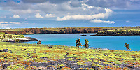 Isabela Island landscape with green vegetation and cacti on lava rocks, surrounded by the turquoise Pacific Ocean, in the Galapagos, Ecuador
