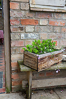 Scented geraniums in weathered wooden recycled Vintage Port Wine bottle box planter, recycled objects antiques in the garden, old brick shed wall and window, bench