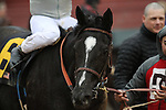 HOT SPRINGS, AR - March 11: It Tiz Well #6 after winning the Honeybee Stakes at Oaklawn Park on March 11, 2017 in Hot Springs, AR. (Photo by Ciara Bowen/Eclipse Sportswire/Getty Images)