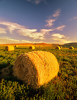 Alfalfa bales. Note second growth beneath bales. Malheur County near Jorden Valley, Oregon.
