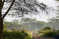 Early morning fog, Lake Nakuru National Park, Kenya