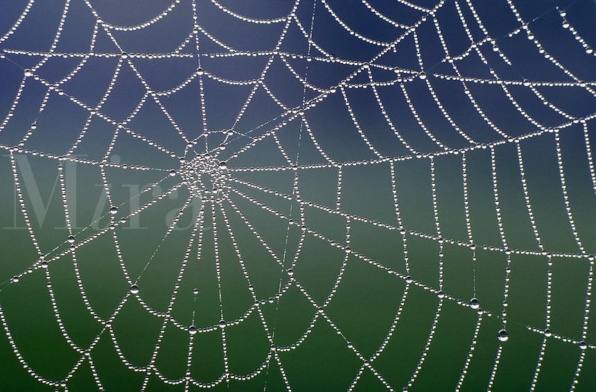 spiderweb, dewdrops, reflections, patterns, spiral. spiderweb, dewdrops, reflections. South Carolina.