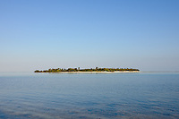 Mangroves - Little Cayman