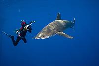 Photographer Doug Perrine lines his camera up on an oceanic whitetip shark, Carcharhinus longimanus, off the coast of the Big Island, Hawaii, Pacific, model release