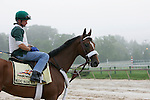 Preakness contender Mucho Macho Man goes to the track for a gallop on May 19, 2011, at Pimlico Race Course in Baltimore, MD. (Joan Fairman Kanes/EclipseSportswire)