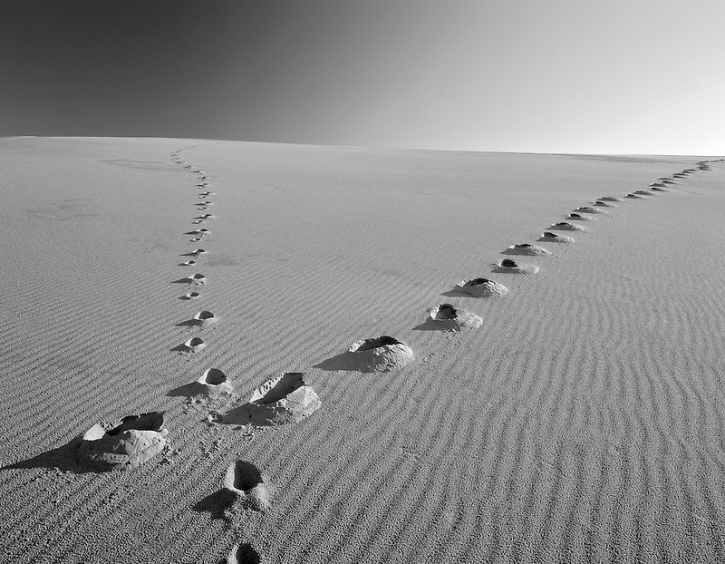 M00403M.tiff   Footprints up sand dune. Oregon Dunes National Recreational Area, Oregon