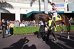 Royal Delta with Mike Smith up in the walking ring before the Sabin Stakes (G3) at Gulfstream Park. Hallandale Beach Florida. 02-17-2013