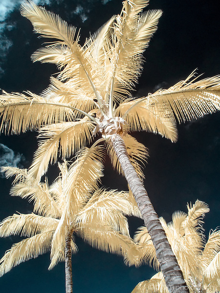Colorful infrared image of palm trees on a Maui beach