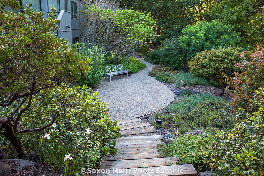 Backyard California native plant garden with steps leading into gravel patio and bench;  Katherine Greenberg