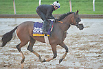 October 28, 2015 :   Salama, trained by Charles Lopresti and owned by Maria Santa Stable, exercises in preparation for the Longines Breeders' Cup Distaff at Keeneland Race Track in Lexington, Kentucky on October 28, 2015. Scott Serio/ESW/CSM