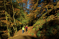 Walking through Calderglen Country Park during autumn, East Kilbride, South Lanarkshire
