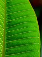 close up of green glowing leaf