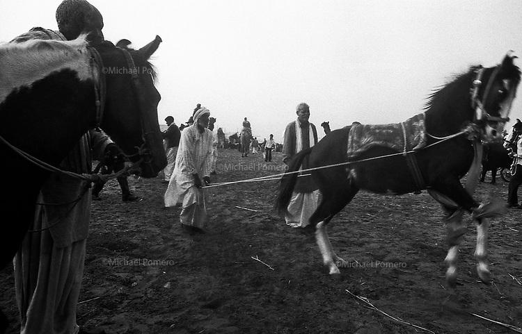 11.2010 Pushkar (Rajasthan)<br /> <br /> Man drawing up a horse during the fair.<br /> <br /> Homme en train de dresser un cheval pendant la foire.