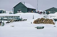 V Halter Nulato Chkpt Yukon River Iditarod AK 1984