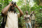 Botanist Ulrich Bogendre and field assistants looking at trees in lowland rainforest for carbon study, Lope National Park, Gabon