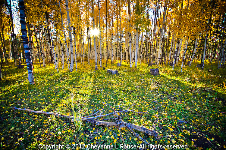 Aspen Meadow - Flagstaff, Arizona - fall colors