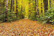 Lincoln Woods Trail in Lincoln, New Hampshire USA during the autumn months. The Lincoln Woods Trail follows the old railroad grade of the old East Branch & Lincoln Logging Railroad (1893-1948).