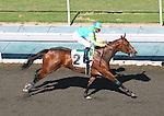 24 October 2009: Moon de French and Garrett Gomez win an allowance race at Oak Tree at Santa Anita Park, Arcadia, CA