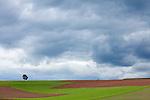 Europa, DEU, Deutschland, Hessen, Burgwald, Gemuenden (Wohra), Agrarlandschaft, Wolken, Feld, Acker, Baum, , Kategorien und Themen, Natur, Umwelt, Landschaft, Jahreszeiten, Stimmungen, Landschaftsfotografie, Landschaften, Landschaftsphoto, Landschaftsphotographie, Wetter, Himmel, Wolken, Wolkenkunde, Wetterbeobachtung, Wetterelemente, Wetterlage, Wetterkunde, Witterung, Witterungsbedingungen, Wettererscheinungen, Meteorologie, Bauernregeln, Wettervorhersage, Wolkenfotografie, Wetterphaenomene, Wolkenklassifikation, Wolkenbilder, Wolkenfoto....[Fuer die Nutzung gelten die jeweils gueltigen Allgemeinen Liefer-und Geschaeftsbedingungen. Nutzung nur gegen Verwendungsmeldung und Nachweis. Download der AGB unter http://www.image-box.com oder werden auf Anfrage zugesendet. Freigabe ist vorher erforderlich. Jede Nutzung des Fotos ist honorarpflichtig gemaess derzeit gueltiger MFM Liste - Kontakt, Uwe Schmid-Fotografie, Duisburg, Tel. (+49).2065.677997, archiv@image-box.com, www.image-box.com]