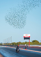 Oct 18, 2019; Ennis, TX, USA; Birds fly over NHRA pro stock motorcycle rider Jianna Salinas during qualifying for the Fall Nationals at the Texas Motorplex. Mandatory Credit: Mark J. Rebilas-USA TODAY Sports