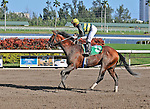06 February 2010:  Loquacious with jockey Jose Lezcano in the Sixth race at Gulfstream Park in Hallandale Beach, FL.