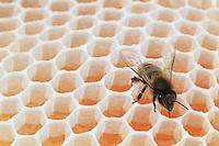 Honey - Propolis - Royal jelly