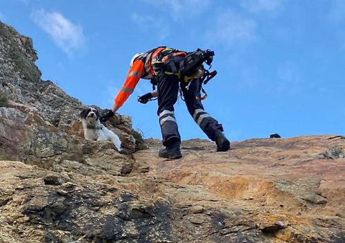 A cliff rescue team member from the Irish Coast Guard's Howth unit is lowered to retrieve Freddie the dog from the cliff at Red Rock in Sutton on Sunday 16 May