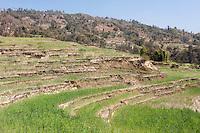 Bhaktapur, Nepal.  Terraced Farmland and Houses on Hillsides above Bhaktapur.