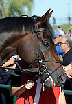 09 September 20: Marlang prior to the grade 1 Northern Dancer Turf Stakes for three year olds and upward at Woodbine Racetrack in Rexdale, Ontario.