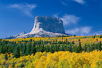 Aspens and Chief Mountain<br />   in Glacier National Park from Crusher Hill<br /> Chief Mountain International Highway<br /> Blackfoot Indian Reservation,  Rocky Mountains,  Montana