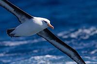 2020 October - Subantarctic Islands of New Zealand