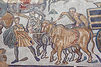 Bulls pulling a wagon from the Ambulatory of The Great Hunt, room no 28,  at the Villa Romana del Casale,  first quarter of the 4th century AD. Sicily, Italy. A UNESCO World Heritage Site.