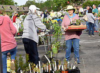 HOW DOES YOUR GARDEN GROW?<br />Janice Noland (right) shops on Saturday May 1 2021 at the Garden Club of Rogers 45th annual  plant sale. Club members sold an array of flowers, vegetable plants, herbs, trees and shrubs in the parking area at First Presbyterian Church in Rogers. The club maintains a variety of public gardens around Rogers, including the butterfly garden at Railyard Park downtown. Profits fund garden maintenance and other club service projects, said Marge Leanord, club president. The Garden Club of Rogers has 70 men and women members and recently marked its 90th anniversary. Members meet monthly, except January, July and August, to hear programs, share gardening tips and take garden tours. Go to nwaonline.com/210502Daily/ to see more photos.<br />(NWA Democrat-Gazette/Flip Putthoff)