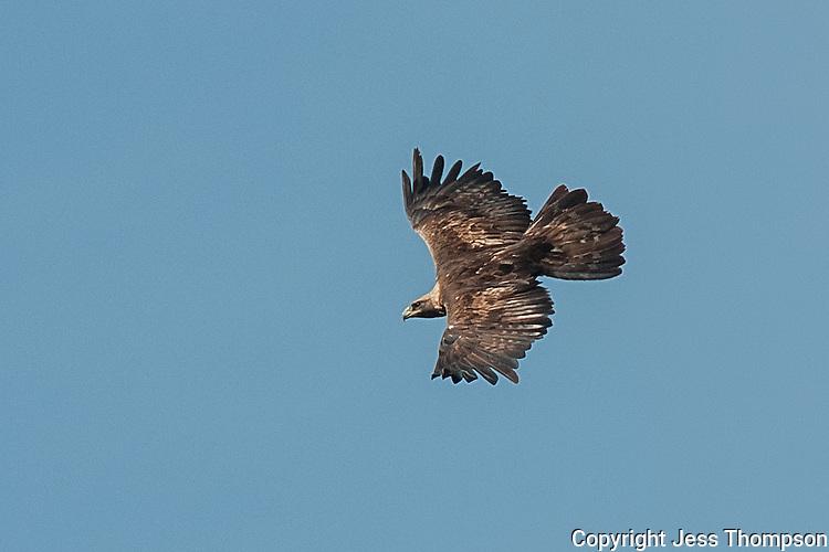 Golden Eagle, Utah