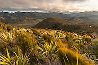 Alpine vegetation at Knuckle Hill with views towards Kahurangi, Nelson Region, West Coast, South Island, New Zealand