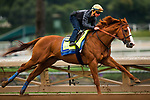 ARCADIA, CA - APRIL 02: Justify with Drayden Van Dyke in full stride completing his final workout for the Santa Anita Derby at Santa Anita Park on April 02, 2018 in Arcadia, California. (Photo by Alex Evers/Eclipse Sportswire/Getty Images)