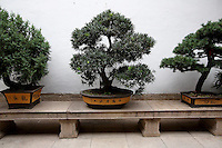 Bonsai tree in a garden inside the Jade Buddha Temple.<br /> <br /> To license this image, please contact the National Geographic Creative Collection:<br /> <br /> Image ID: 2169199  <br /> <br /> Email: natgeocreative@ngs.org<br /> <br /> Telephone: 202 857 7537 / Toll Free 800 434 2244<br /> <br /> National Geographic Creative<br /> 1145 17th St NW, Washington DC 20036
